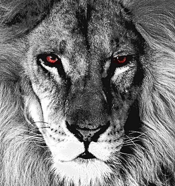 lionheadjpg